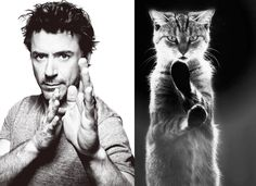 like master like pet, cute kittens, cat in water, celebrities, hot models Cute Kittens, Robert Downey Jr, Crazy Cat Lady, Crazy Cats, Handsome Celebrity Men, Handsome Guys, Men With Cats, Gif Disney, Cat Pose