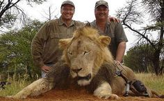 LOOK at the face of Walter Palmer, Minnesota Dentist, Cowardly and Repulsive Big Game Hunter! Killer of endangered species.