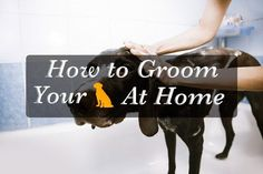How To Groom Your Dog At Home The Most Safely?
