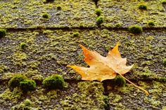 Want to know how to protect your home asphalt roof with algae and moss? Learn with these helpful tips!