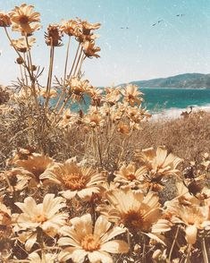 Just a dream. I can just image sitting here, in the warm sun, taking in the small breeze and watching the waves. Spring Aesthetic, Nature Aesthetic, Beach Aesthetic, Aesthetic Collage, Flower Aesthetic, Aesthetic Backgrounds, Aesthetic Iphone Wallpaper, Aesthetic Wallpapers, Photo Wall Collage