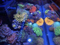Reef Aquarium, Saltwater Aquarium, You Loose, Corals, Secret Santa, Marines, No Worries, Tropical, Saltwater Tank