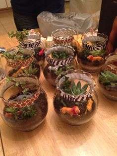 Safari terrariums