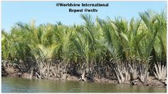 It is imperative for the project to include livelihood creation as a vital part of the combined restoration efforts. The ongoing mangrove research project has identified several options in adapting food production with new type of saline resistant plants and methods in harvesting the nypa palm and other species with potential to withstand changes in sea level rise and other climate change problems.