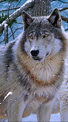 wolf in the snow. Beautiful wolves, Cute