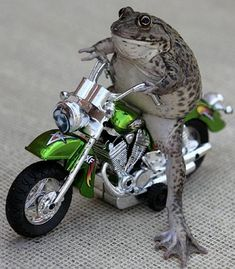 So you say you have a frog who rides a motorcycle, and picks ...
