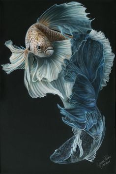 Siamese Fighting Fish Three Painting by Wayne Pruse