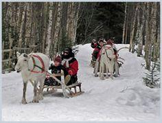 Reindeer via C J Foxcroft