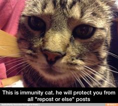 Thank you immunity cat I am eternally grateful