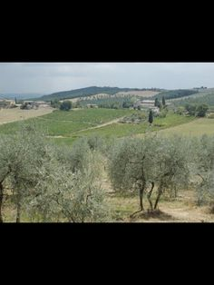 View from olive groves Villa Di Corsano kManningArt Photo