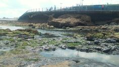 Rock pools at Seaburn beach, Sunderland