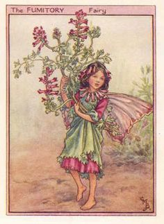 Flower Fairies 1940's: FUMITORY FAIRY. Charming print. Artist: Cicely Barker