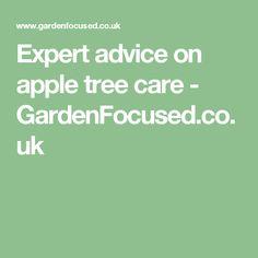 Expert advice on apple tree care - GardenFocused.co.uk