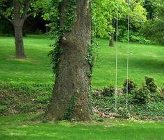 Tree swing by sue