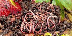 Auf den Wurm gekommen? Mit einer selbstgebauten Wurmfarm bringen Sie wieder mehr Leben in das Erdreich Ihres Gartens. Der Dünger aus dem Wurm-Komposter ist unbezahlbar!