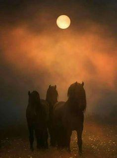 Misty sunset horse silhouettes.