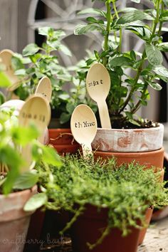 Wooden spoon herb marker