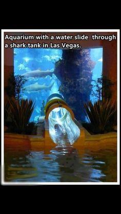 Water Slide Going Through Aquarium