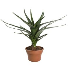 Artificial plant, 27'' green agave