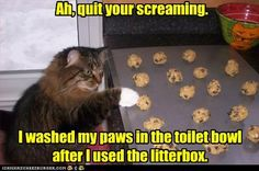 # cats....