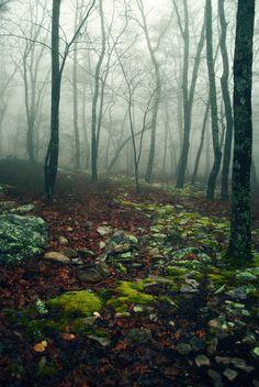 mystic wood.