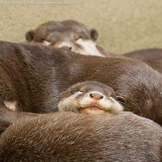 Das Otterhaus 【カワウソ舎】