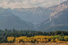 A 28,000-acre mountain range that form the boundary between southwest Montana and Idaho, the Centennial Mountains Wilderness Study Area is some of southwest Montana's wildest country. Designated as an Area of Critical Environmental Concern in 2006, it is considered an important corridor for wildlife movement, providing an east-west trending mountain range connecting the Yellowstone Ecosystem with ...