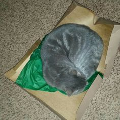 we always get a cat in the box. and it can be any box. he will try to lay in.