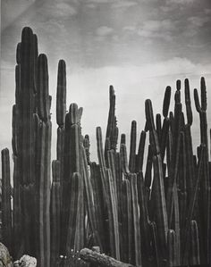 Brassaï, Cereus (Mexique), Jardin Exotique de Monaco, ca. 1933