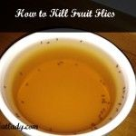 How to kill fruit flies with things already in your home.