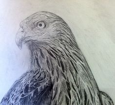 Red Kite- pencil on paper, by Ged Peter Lynn of Slakewater Creative