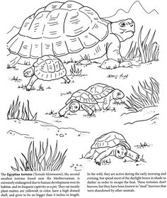 The World of Turtles Dover Publications Disney Coloring Pages, Animal Coloring Pages, Coloring For Kids, Coloring Pages For Kids, Coloring Books, Koolaid Playdough, Turtle Quilt, Pencil Drawings Of Animals, Object Drawing