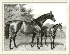 Lily Agnes(1871)Macaroni- Polly Agnes By The Cure. 5x5 To Blacklock. 32 Starts 21 Wins. Won Northumberland Plate, Doncaster Cup, Ebor H. Dam Of Ormonde (English TC Crown Winner And Top Sire Whose Grandson Sired Another TC Winner).