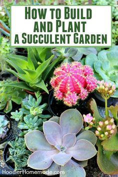 Succulents are all the rage now! They are SUPER easy to plant and take care of! Learn how to build and plant your own Succulent Garden with these step-by-step photos and instructions! #succulents #gardening #easyplants #plantstogrow