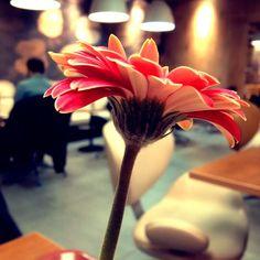 Не люблю цветы, но этот прекрасный :D #когдаскучновмаке