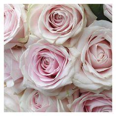 addobbi di rose per matrimonio - fiorista bohem sarnico - fotografie di matrimonio non in posa maisonstudio ©