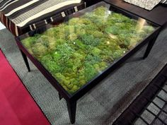 Moss table. Would be amazing in a kids room, when combined with the cute little ideas here:  http://naomimoore94.tumblr.com/post/24601230035/inhabited-terrarium