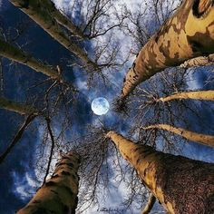 It's a beautiful world! Moon Pictures, Nature Pictures, All Nature, Amazing Nature, Beautiful Moon, Beautiful World, Shoot The Moon, Moon Photography, Good Night Moon