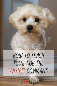[Dog training tips] TIP While puppy training by using a leash, ensure that you are maintaining your dog collar tight, yet slightly free. When the collar is too tight, it may actually make your canine would like to pull you. Dog Training Techniques, Dog Training Tips, Potty Training, Training School, Puppy Leash Training, Training Collar, Training Classes, Training Videos, Brain Training