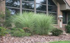 Okrasná tráva dodá dramatičnost vaší zahradě
