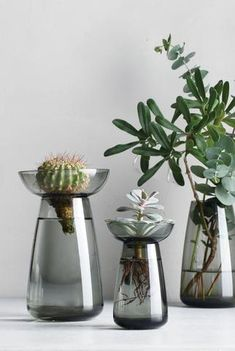Watch flowers bloom, roots grow, and let the beauty of live plants inspire you. The two-part Kinto Aqua Culture Vase is perfect for herbs, bulbs and Aqua Culture, Bulb Vase, Vase Design, Grands Vases, Grey Glass, Japanese Design, Flower Vases, Glass Vase, Beautiful
