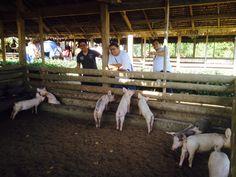 Binhi sa Panginabuhian Organic Demo Farm in Maribojoc Bohol, Places Of Interest, Places To Travel, Places Ive Been, Philippines, Travelling, Organic, Destinations, Holiday Destinations