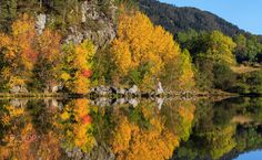 Autumnal Colours - The colours of autumn reflecting in calm lake in Norway.