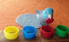 Daily Cute: Parrotlet Knows His Colors    Care2 Causes