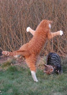 Funny cat fight
