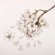 벚꽃 완성! 흰색꽃은 역시 어렵지만 이번 그림을 그리면서 조금 극복한것 같아요 #이랑그림