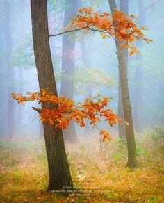 https://flic.kr/p/qY16Z7 | Autumn | Poland, Lower Silesia, |  http://bax.wroclaw.pl