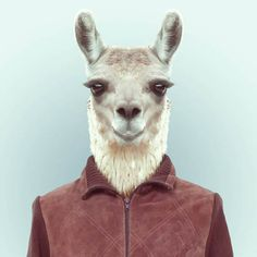 Zoo Portraits Yago Partal