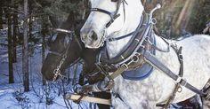 Cómo deshacerte de las manchas de estiércol de los caballos. Las manchas de estiércol de un caballo a menudo se producen en los establos. Si un caballo puede alejarse de su propio estiércol antes de acostarse o de rodar, por lo general lo hará. Sin embargo, en un corral o establo, a veces no tiene más remedio que acostarse sobre su propio estiércol. Eliminar estas manchas de un caballo una vez que se han ...