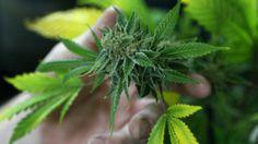 NY to allow limited use of medical marijuana. #news